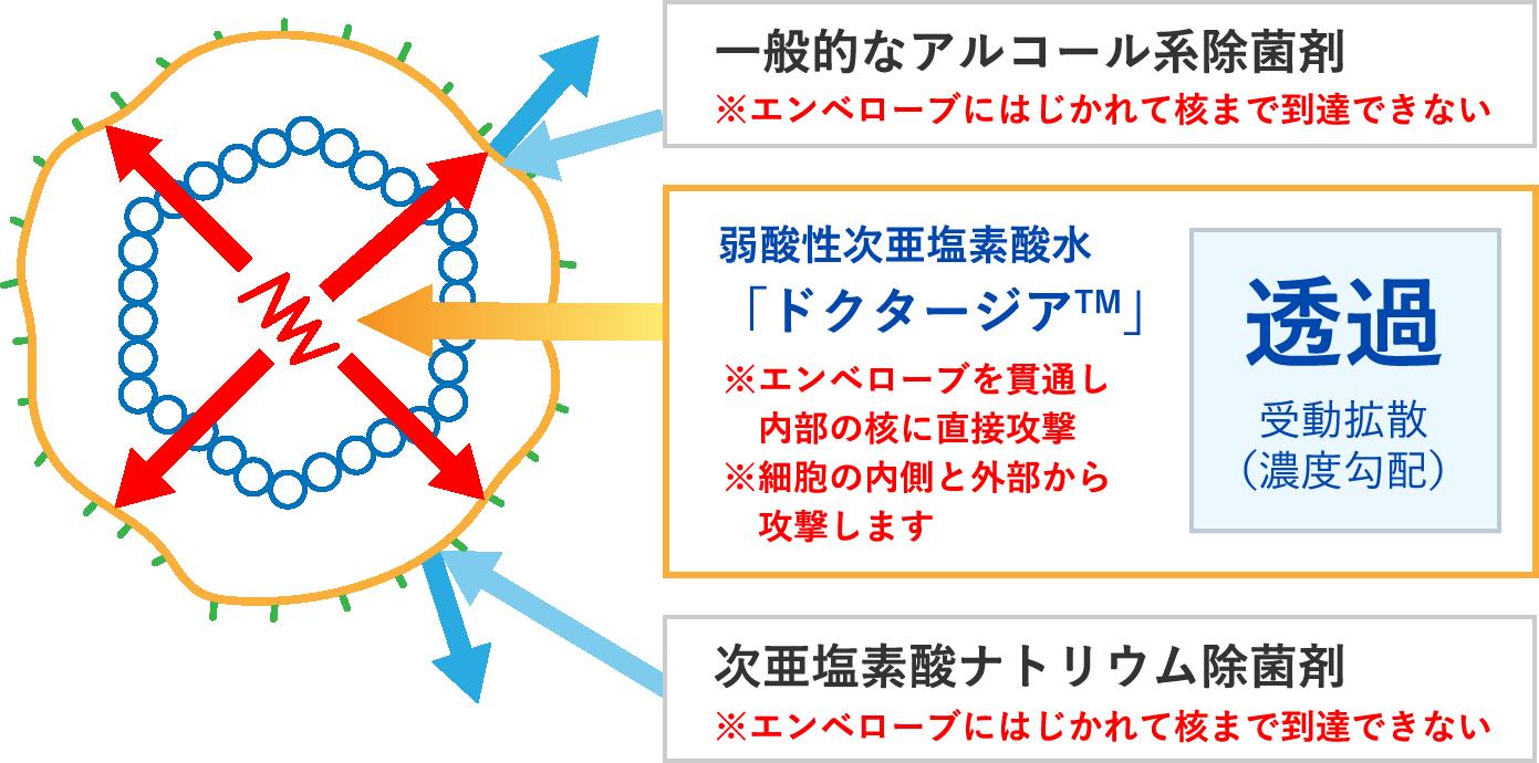 ウイルスに対する除菌剤別の除菌構造